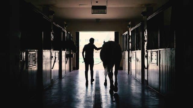 Horse riding at Al Forsan International Sports Resort