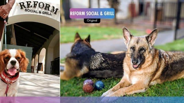 Reform Social & Grill | Halloween 2020